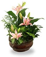 Radiant Foliage Planter